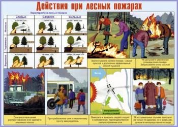 15. Плакат по гражданской обороне: Действия при лесных пожарах
