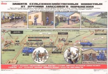 58. Плакат по гражданской обороне: Защита сельскохозяйственных животных от оружия массового поражения