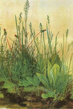 042. Живопись: Трава. Альбрехт Дюрер