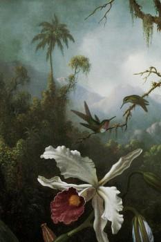 051. Живопись: Калибри над белой орхидеей. Художник Мартин Джонсон Хед.