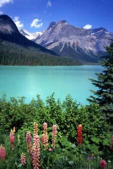 001. Пейзаж: Цветы около горного озера