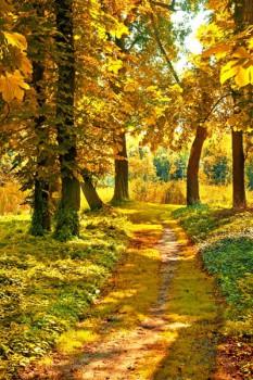003. Пейзаж: Осень в лесу