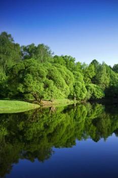 005. Пейзаж: Вертикальный пейзаж с лесом и рекой