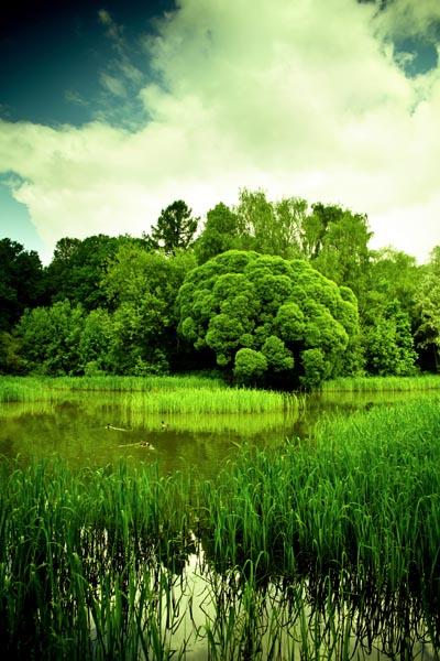 007. Пейзаж: В пойме реки