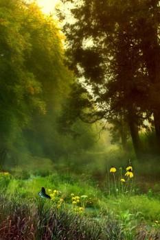 014. Пейзаж: Летним утром