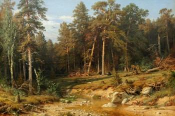 023. Пейзаж: Сосновый Бор. Мачтовые леса в Вятской губернии.