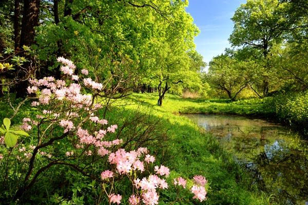 040. Пейзаж: Лесные цветы