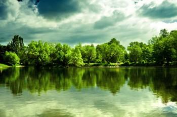 065. Пейзаж: Живописный лес с речкой