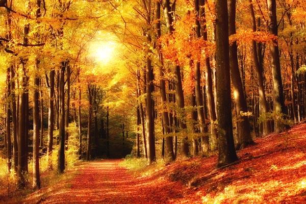 067. Пейзаж: В парке. Золотая осень