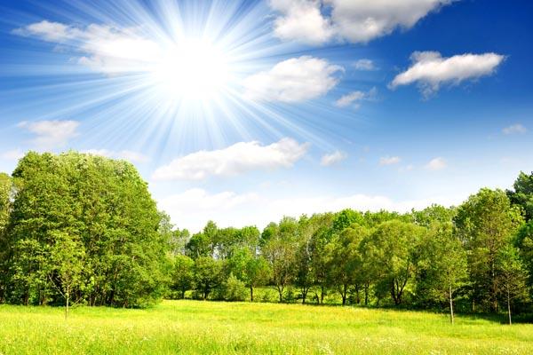 069. Пейзаж: На лужайке под ярким солнцем