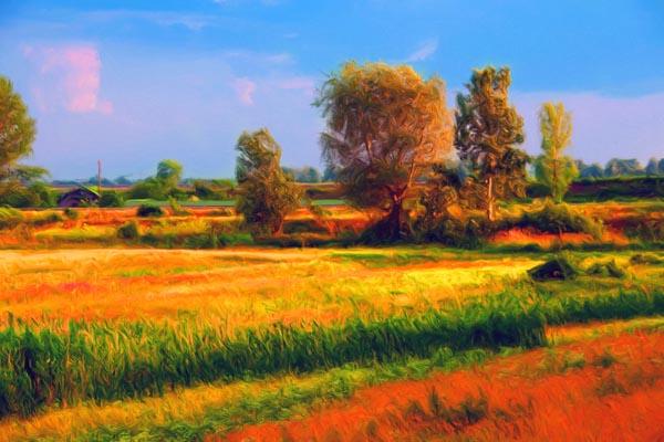 074. Пейзаж: Ярко-багровое поле у деревни