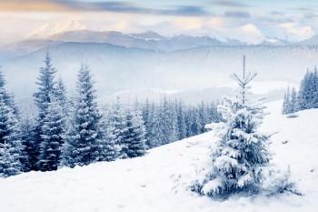 080. Пейзаж: Зимний горный лес