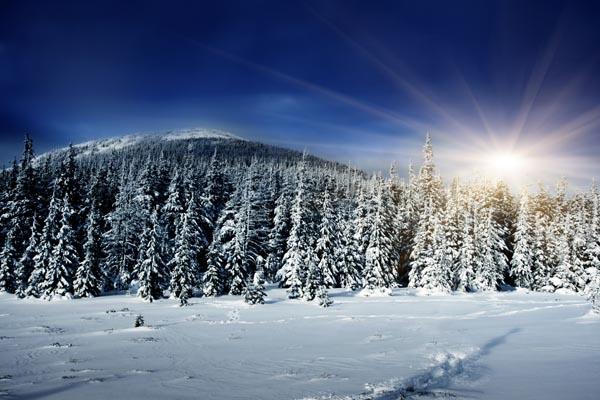 081. Пейзаж: Зимний лес