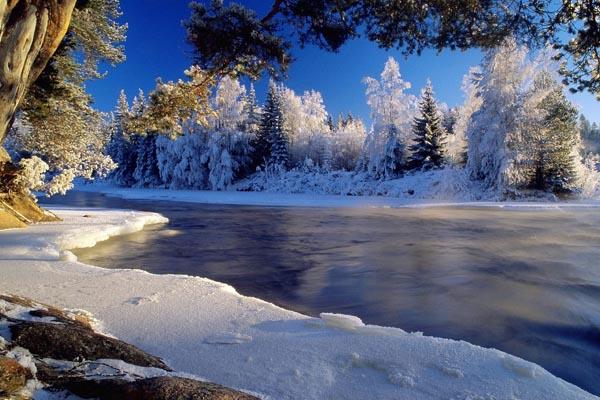 098. Пейзаж: Красивые заснеженные деревья на речке