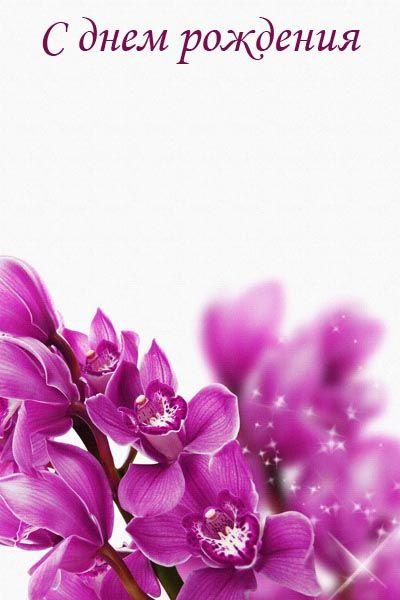 002. Поздравление: Сиреневые цветы