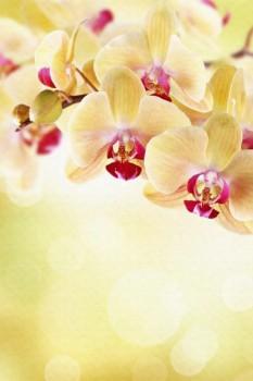 006. Поздравление: Желто-красные орхидеи