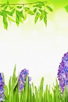 008. Поздравление: Синий гиацинт