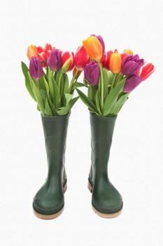 012. Поздравление: Тюльпаны в сапогах