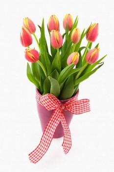 014. Поздравление: Тюльпаны в розовой корзинке