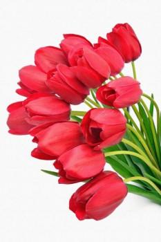 018. Поздравление: Букет красных тюльпанов