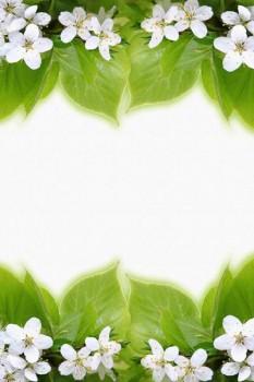 024. Поздравление: Рамка из цветов яблони