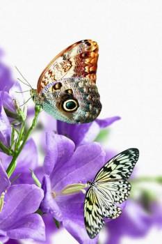 025. Поздравление: Бабочки на фоне синих цветов