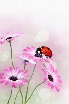 026. Поздравление: Божья коровка на розовой ромашке