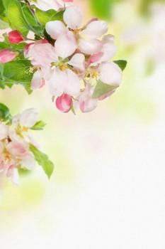 029. Поздравление: Веточка бело-розовых цветов