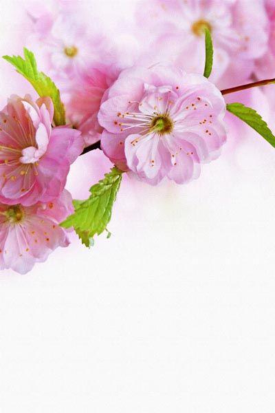 030. Поздравление: Веточка розовых цветов