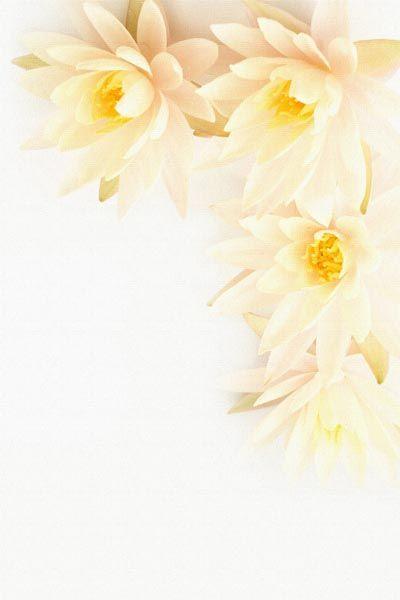033. Поздравление: Бело-желтые цветы