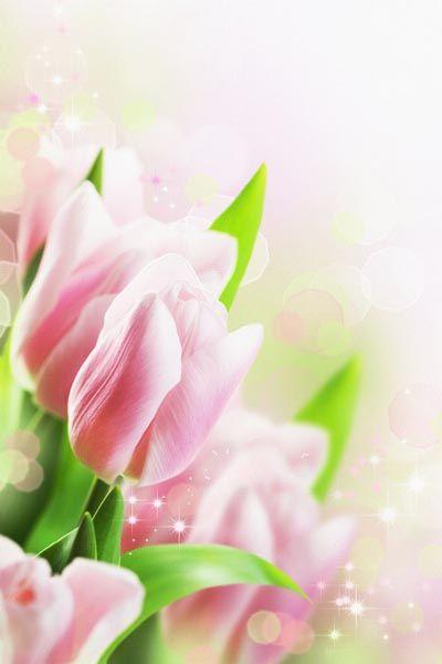 035. Поздравление: Нежно-розовые тюльпаны