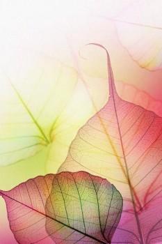 044. Поздравление: Прозрачные листья