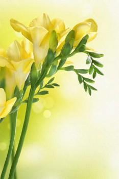 051. Поздравление: Желтые цветы на желтом фоне