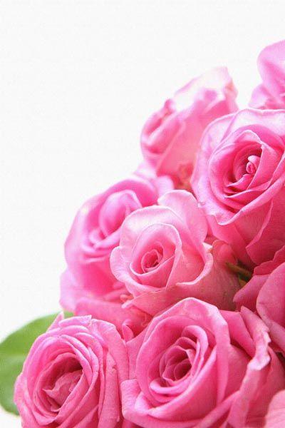 054. Поздравление: Букет розовых роз