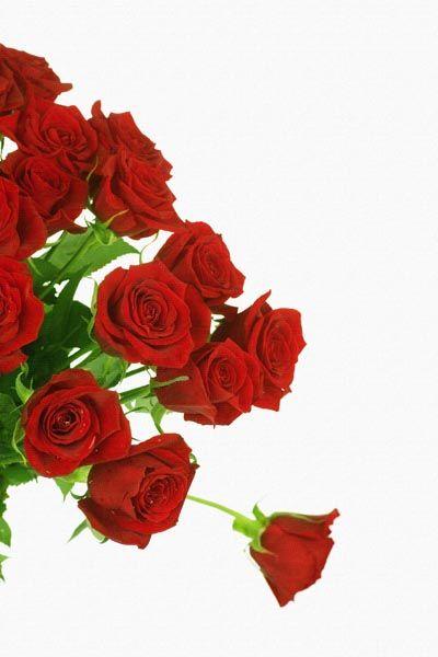 056. Поздравление: Букет алых роз