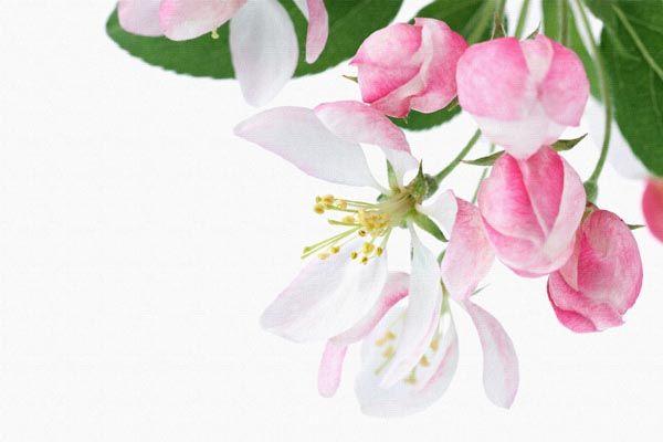 060. Поздравление: Нежно-белые цветы