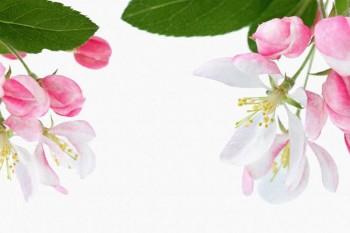061. Поздравление: Рамка из розового жасмина