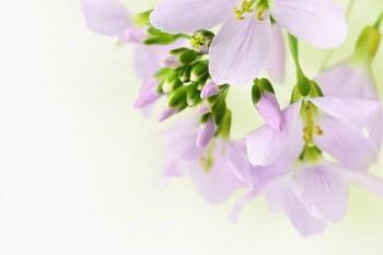 065. Бело-зеленые цветы