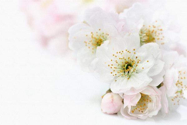 066. Поздравление: Белые цветы на розовато-белом фоне
