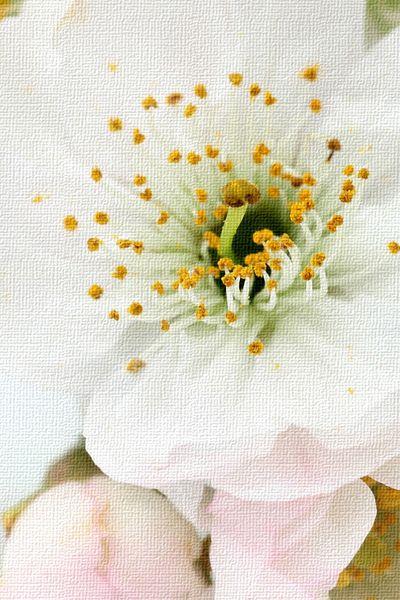 066. Качество изображения в реальном размере