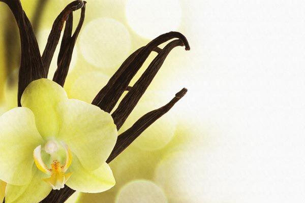 067. Поздравление: Одинокая желтая орхидея