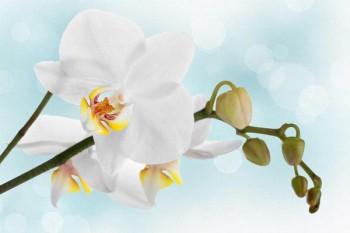 071. Поздравление: Белая орхидея на фоне неба