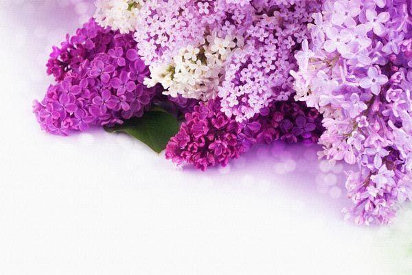 http://www.st-dialog.ru/wp-content/uploads/plakaty-pozdravleniya/077.jpg