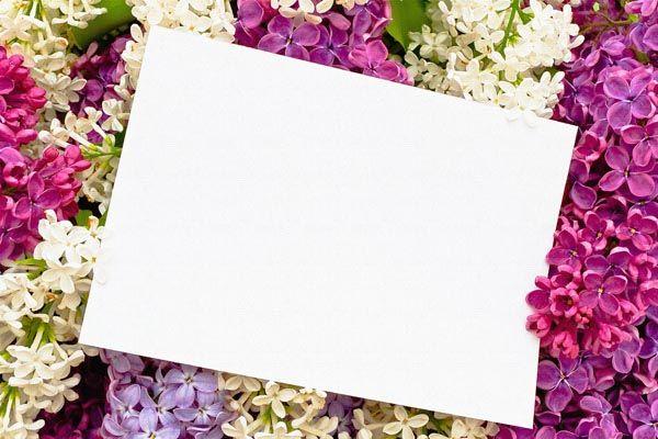 080. Поздравление: Лист бумаги на разноцветной сирени