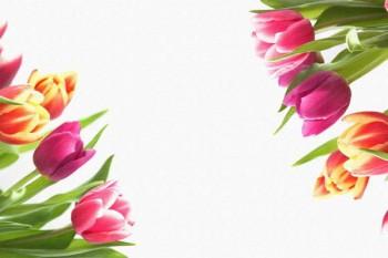 083. Поздравление: Разноцветные тюльпаны
