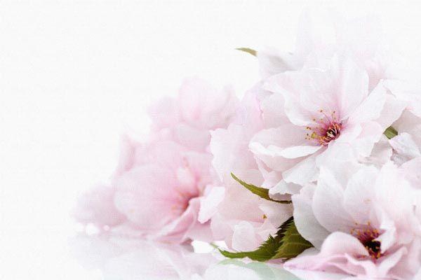 096. Поздравление: Розовато-белые цветы