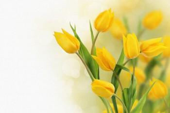 097. Поздравление: плакат на Юбилей, на День Рождения, с Праздником!