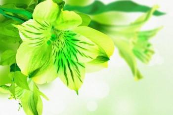 098. Поздравление: Зеленый цветок
