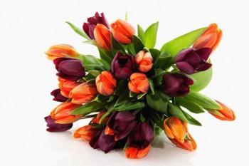 101. Поздравление: Букет алых и бардовых тюльпанов