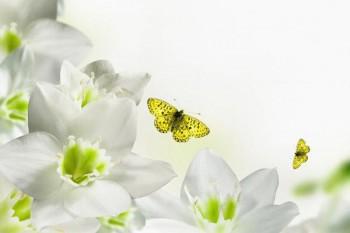 104. Поздравление: Зелено-белые цветы с бабочками